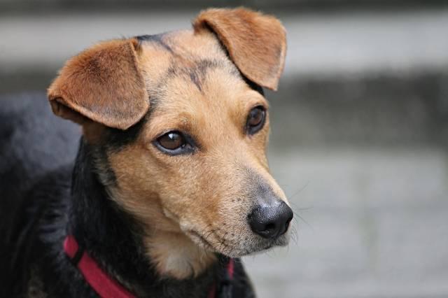 chien pour les séniors